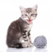 Cute tabby kitten meowing — Stock Photo