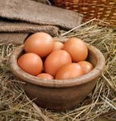 Chicken easter eggs — Stock Photo
