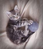 Playful gray kitten with ball — Stock Photo