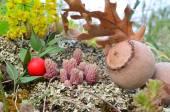 Frutos do solo vulcânico — Fotografia Stock