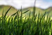 Abstract grass with hills in background — Stock Photo