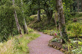 Dramatic forrest path — Stock Photo