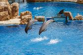 Dolphin Show at Sea World — Stock Photo