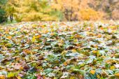 Fallen leaves in autumn season — Stockfoto