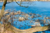 Reeds and reflection in still water — Stock Photo