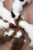Puppies eating from the plate — Stock Photo
