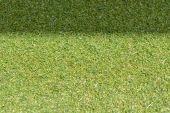 Green grass with empty area for text background. Nature background. — ストック写真