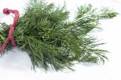 Bunch of dill on white — Stock Photo