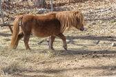 Brown Pony — Stock Photo