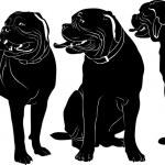 Dogue de Bordeaux — Stock Vector #53397361