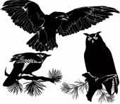 Cuckoo, owl and  eagle — Stock Vector