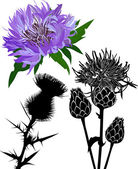 Thistle flower and silhouette — Stock Vector