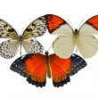 Three colorful butterflies — Stock Photo #69215609