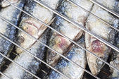 Grilled sardines — Stock Photo