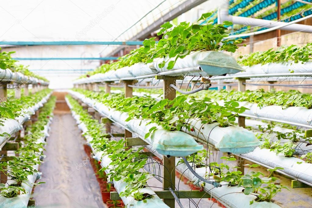 Выращивание цветов в теплице как 74