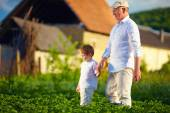 Grandfather and grandson together on their homestead, among potatoes rows — Stock Photo