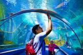Jeune homme, touristique touchant le verre sous crampe-poissons, alors qu'il visitait une traversée sous-fluviale marine — Photo