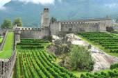 замок и виноградники — Стоковое фото