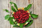 Wild Cherries view — Stock Photo