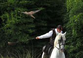 Falconry on horseback — Stock Photo