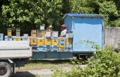 Mobile apiary — Stock Photo