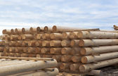 Cylindrical logs for log home, stacked in stack — Stock Photo