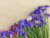 Cornflowers, wild flowers. Centaurea. — Stock Photo