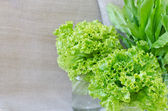 Fresh lettuce and sorrel. — Stock Photo
