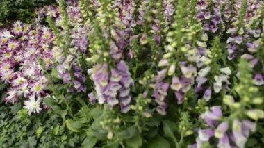 Scenic Flower Garden in Las Vegas — Stock Video