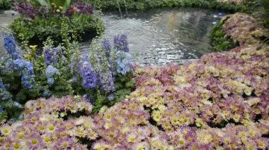Scenic Flower Garden — Stock Video