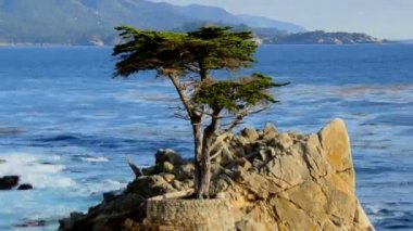 Time Lapse of Lone Cypress Tree — Stock Video