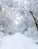 Winter road — Stock Photo