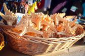 Starfish in souvenir shop — Stock Photo