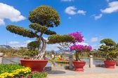 Bonsai  trees Garden — Stock Photo