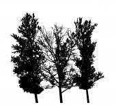 Tree Silhouette Isolated on White Backgorund. Vecrtor Illustrati — Stock Vector
