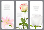 Beautiful Floral Cards with  Realistic Flowers Rose and Lilly Ve — Vector de stock