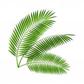 Palm Leaf Vector Illustration — Vettoriale Stock