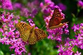Butterfly on flowers in the garden — Stockfoto