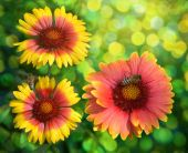 Bees on colour, collecting nectar — Stockfoto