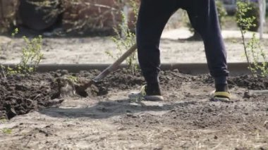 People dig the ground with a shovel manual labor — Stock Video