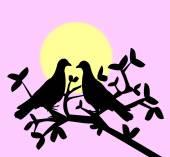 Pássaros do amor — Fotografia Stock