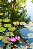 Water lily in the lagoon with reflections of the surrounding rain forest — Stock Photo