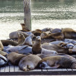 Sea lions, Pier 39, San Francisco, California — Stock Photo #52606019