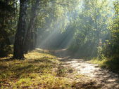 The morning light forest. — Stock Photo