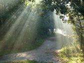 Forest bevels. — Foto de Stock