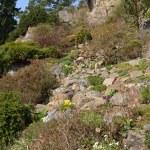 A small rock garden — Stock Photo #69889787