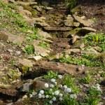 A small rock garden — Stock Photo #69890231