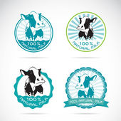 Set of vector an dairy cows label on white background — Stock Vector