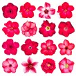 Collection of red flowers isolated on white background. — Stock Photo #58126947
