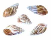 Shellfish set isolate on a white background — Stock Photo